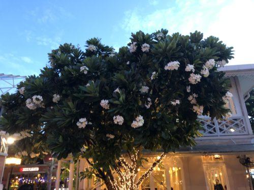 日本では見かけないお花